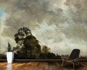 Landscape at Hampstead, Tree and Storm Clouds, c.1821 (oil on paper laid down on panel) wallpaper mural kitchen preview