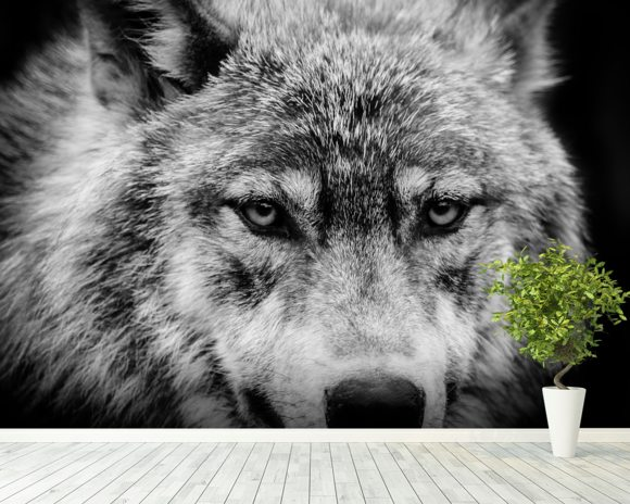 Wolf Eyes wallpaper mural room setting