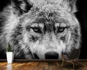 Wolf Eyes wallpaper mural kitchen preview
