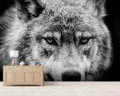 Wolf Eyes wallpaper mural living room preview