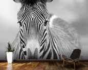 Zebra Pose mural wallpaper kitchen preview