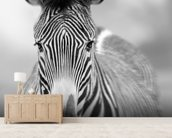 Zebra Pose mural wallpaper living room preview