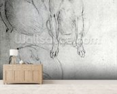 Study of a dog and a cat, c.1480 (metalpoint on paper) wallpaper mural living room preview