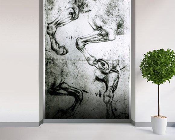 Studies of Horses legs (pen and ink on paper) mural wallpaper room setting