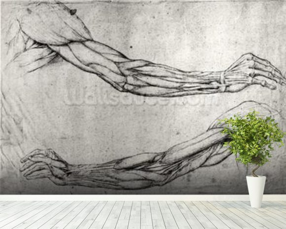 Study of Arms (pen & ink on paper) wall mural room setting