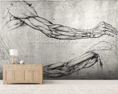 Study of Arms (pen & ink on paper) wall mural living room preview