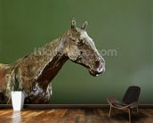 Horses Head (bronze) (detail of 335585) wall mural kitchen preview