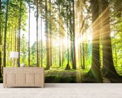 Forest Sun mural wallpaper living room preview