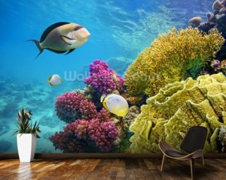 Coral Reef - Red Sea - Egypt wall mural