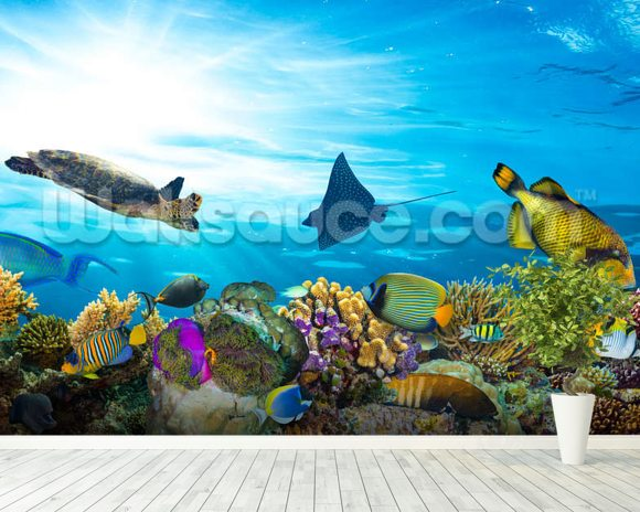 Sea Life Coral Reef Panorama wallpaper mural room setting