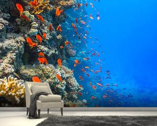 Coral Reef Society wall mural
