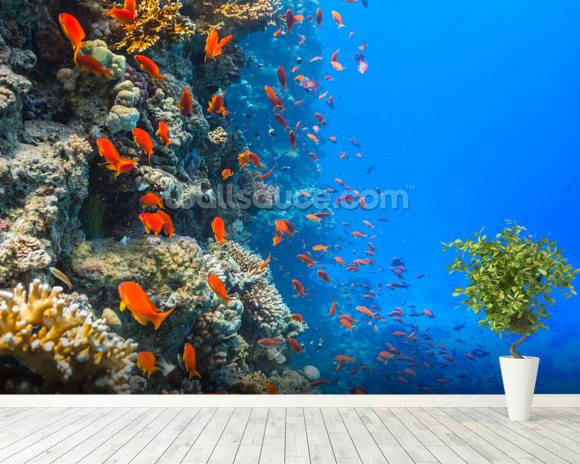 Coral reef society wallpaper wall mural wallsauce usa for Coral reef mural