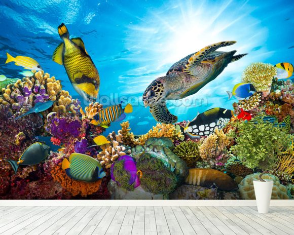 Coral Reef Diversity mural wallpaper room setting