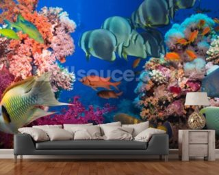 Coral Reef Life wall mural