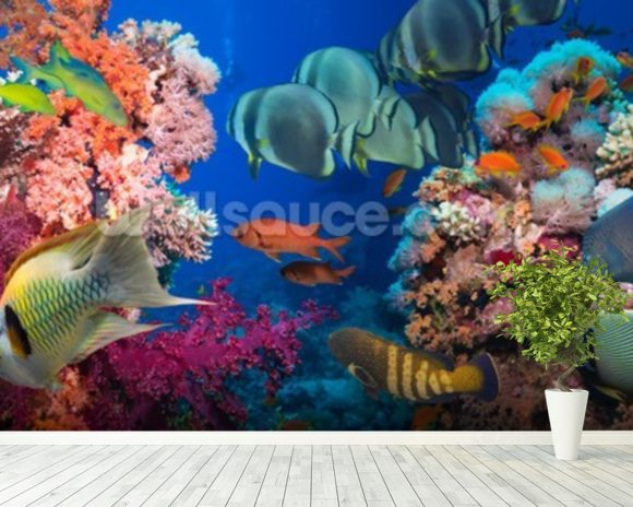 Coral reef life wallpaper wall mural wallsauce canada for Coral reef mural