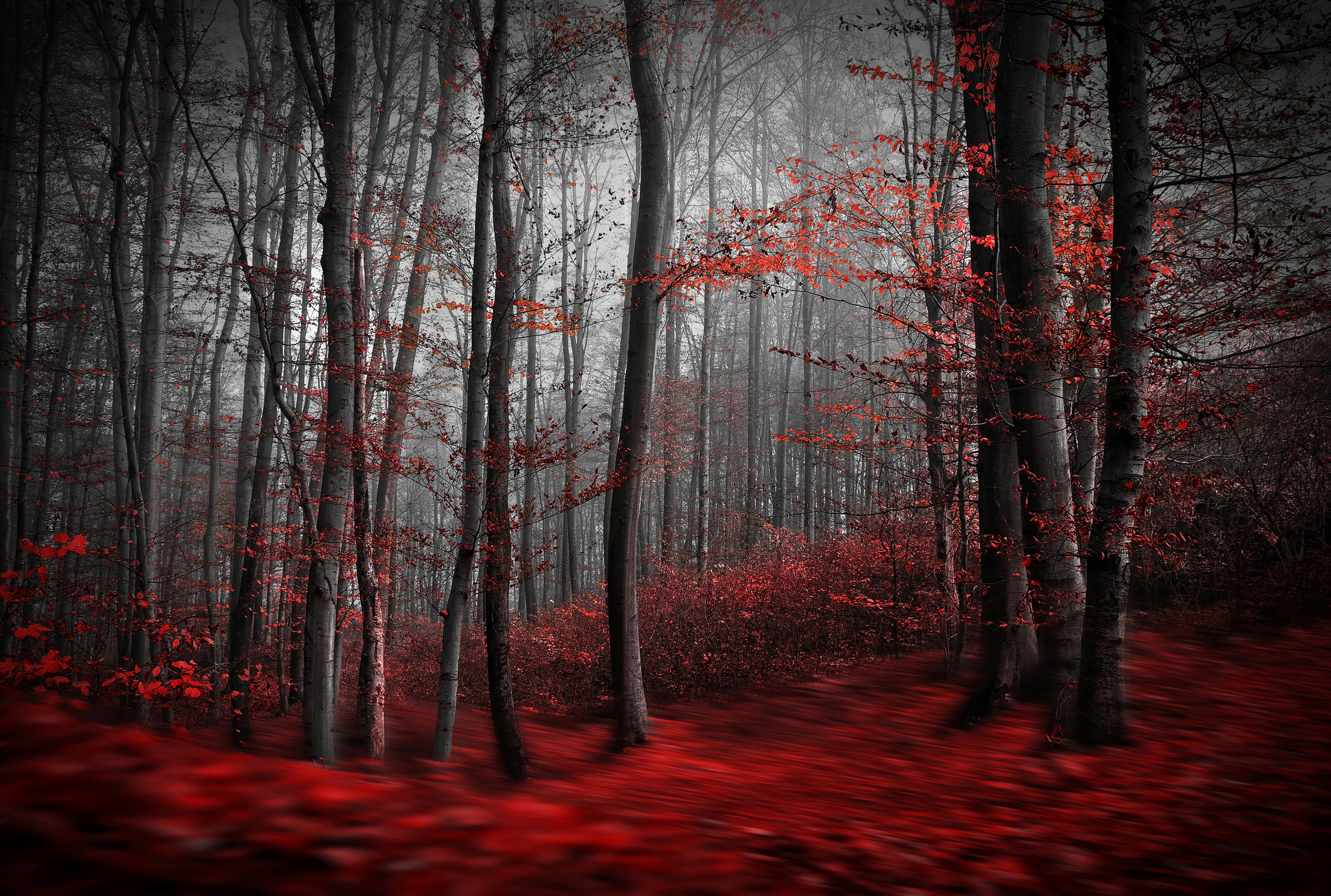 Forest Wall Mural red carpet forest wall mural & red carpet forest wallpaper