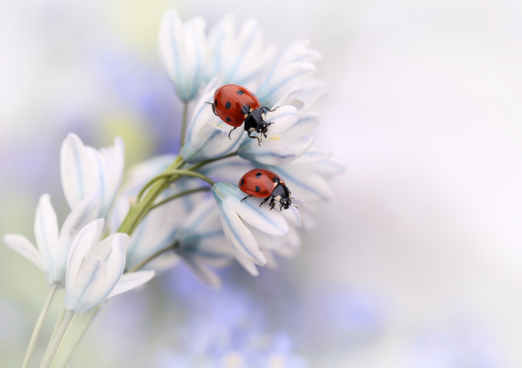 Ladybirds mural wallpaper