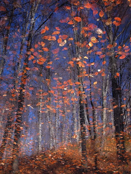 Autumn Leaves Fall wall mural