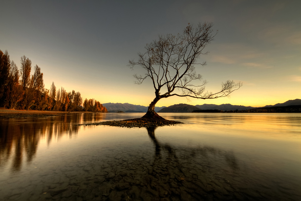 The Wanaka Tree wall mural