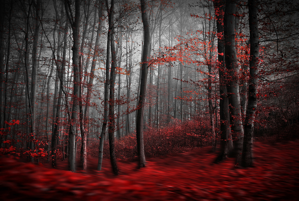 Red Carpet Forest wallpaper mural