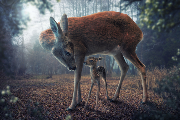 Mother and Fawn mural wallpaper