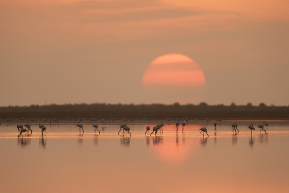 Flamingos at Sunrise wall mural