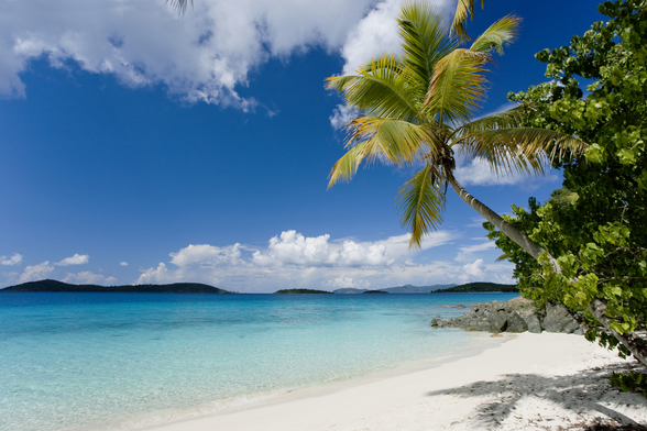 U.S. Virgin Islands, St. John, Palm Tree Beautiful Beach wallpaper mural