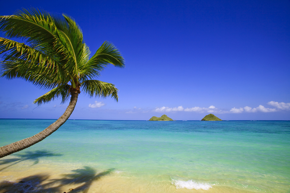 Hawaii, Oahu, Lanikai, Palm Tree Over Blue Ocean wall mural