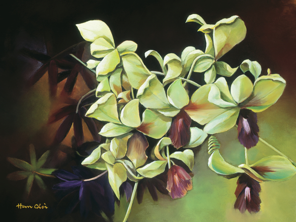 Orchid Group - Cluster Of Green Orchids On Stem wall mural