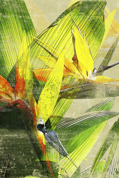 Bird Of Paradise Blossoms mural wallpaper
