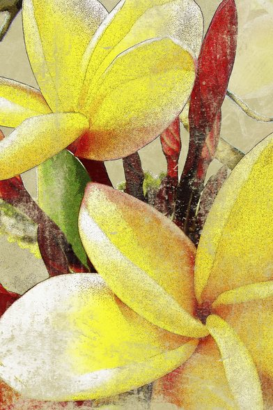 Two Plumeria Blossoms wall mural