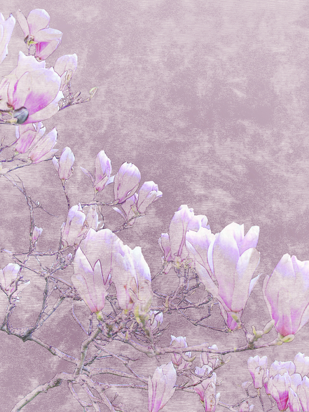Flower Blossoms On Tree Branch wall mural