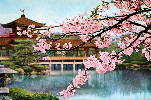 Lake With Cherry Blossoms And Shrine - Japan mural wallpaper