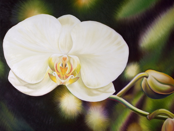 White Phalaenopsis Orchid Blossom wall mural