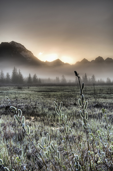 Morning Fog on the Copper River Highway wallpaper mural