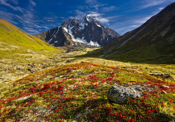 Bold Peak And Colorful Fall Tundraa wallpaper mural