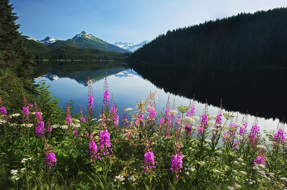 Auke Lake On A Clear Day With Fireweed wallpaper mural