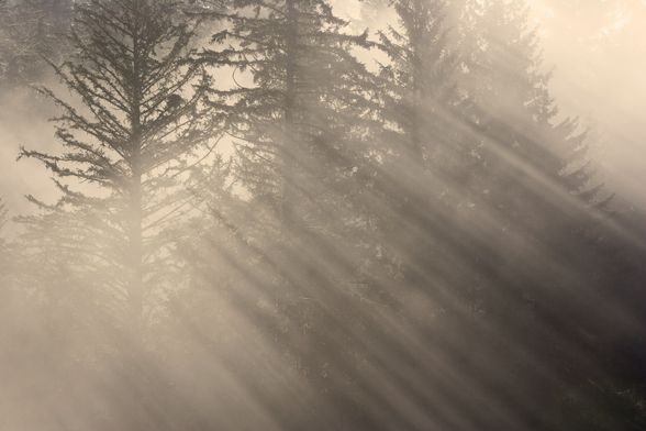 Morning Rays Shine Through the Mist wallpaper mural