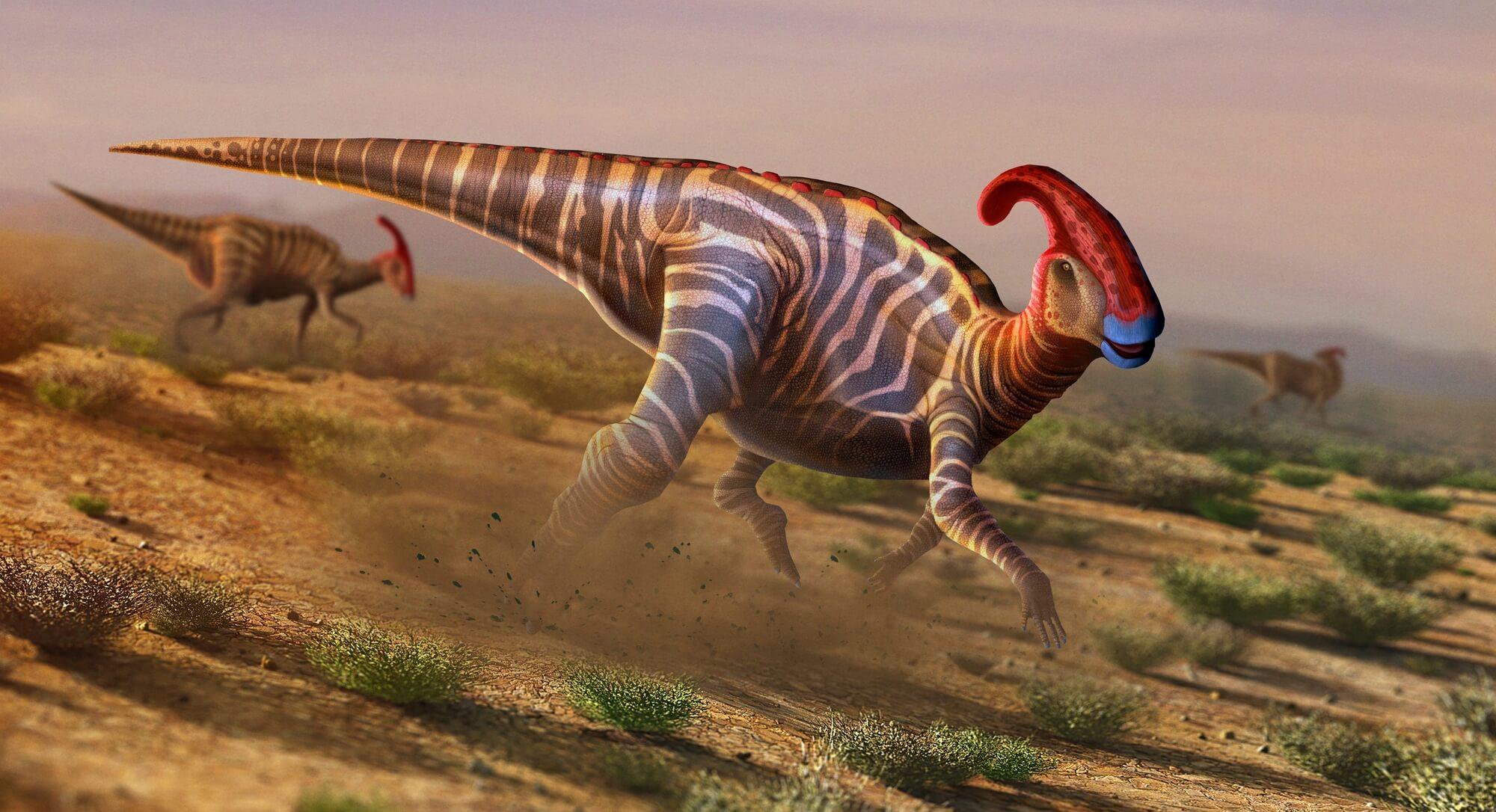Parasaurolophus wall mural parasaurolophus wallpaper wallsauce parasaurolophus wall mural photo wallpaper amipublicfo Image collections