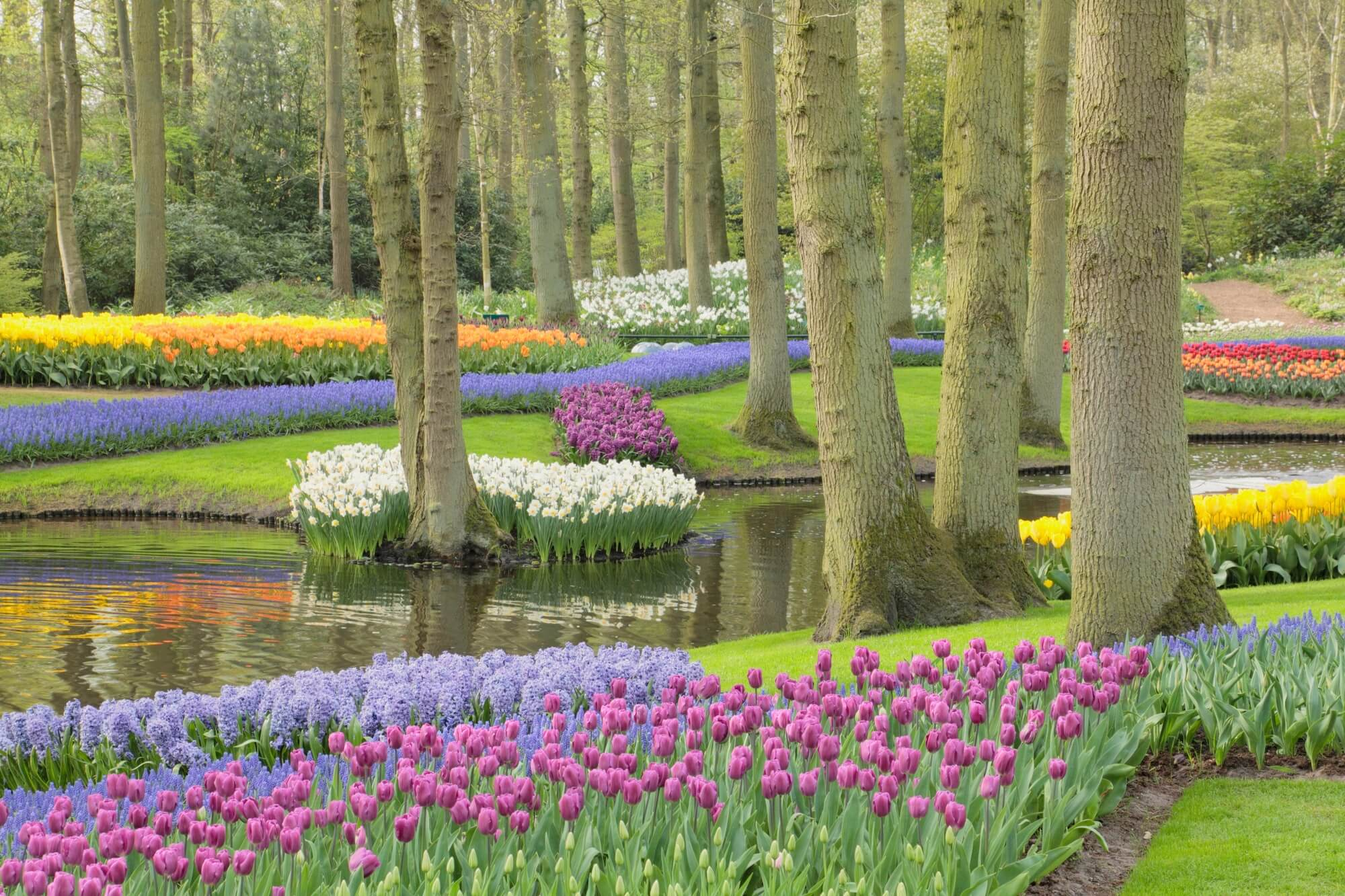 Keukenhof gardens wall mural wallsauce uk - Flower wallpaper mural ...