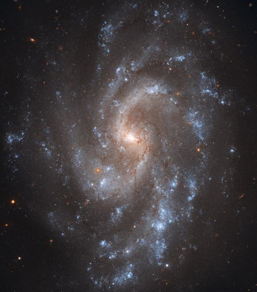 Hubble's View of NGC 5584 wall mural