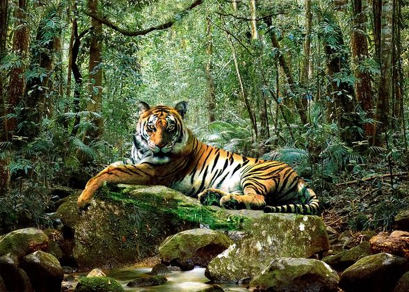 Tiger in Jungle wall mural