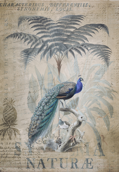 Peacock Jungle wall mural