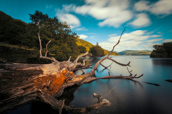 Fallen Tree Lake Windermere wall mural