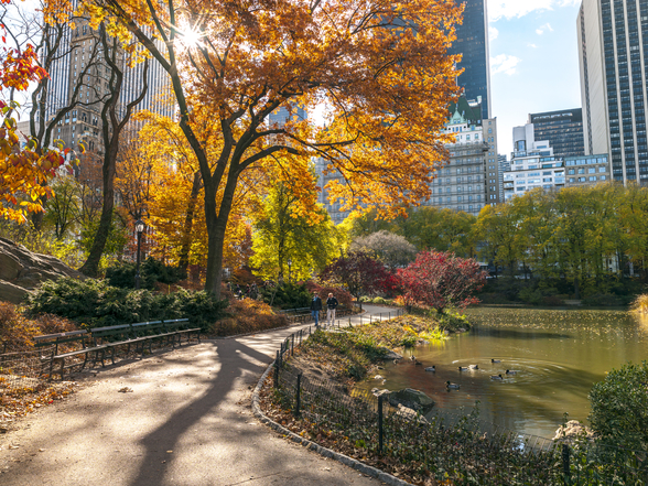Pathway Through Central Park in Autumn mural wallpaper