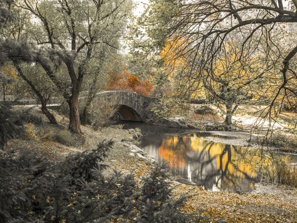 Central Park Stream wall mural