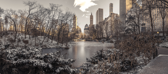 Winter Dawn in Central Park wallpaper mural
