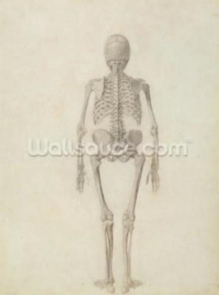 A Comparative Anatomical Exposition of the Structure of the Human Body with that of a Tiger and a Common Fowl: Human Skeleton, Posterior View, 1795-1806 (pencil on paper) wall mural