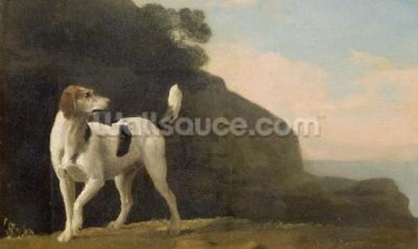 A Foxhound, c.1760 (oil on paper laid on board) wall mural