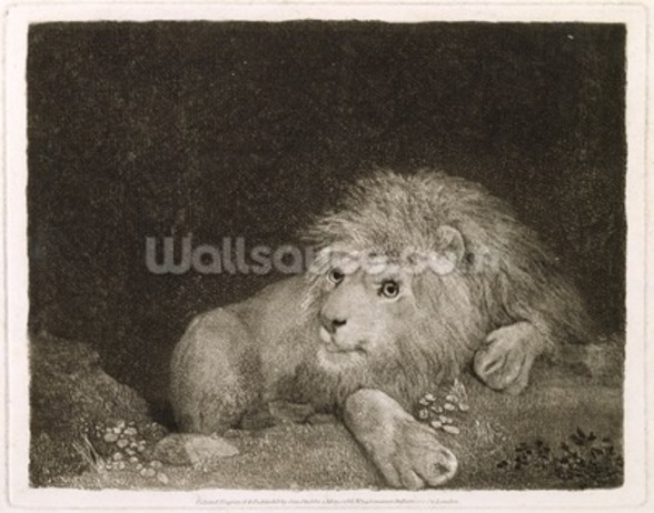A Lion (A Recumbent Lion) engraved by the artist, pub. 1788 (etching) wall mural